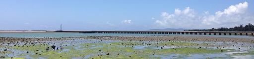 沖縄 潮干狩り 沖縄で潮干狩りをするとなにが穫れるのか